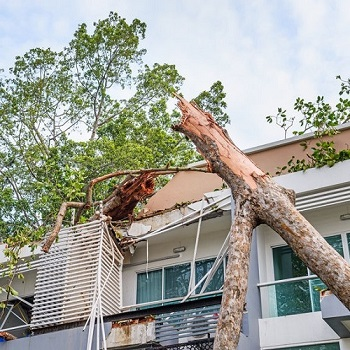 An Apartment Damaged by a Fallen Tree